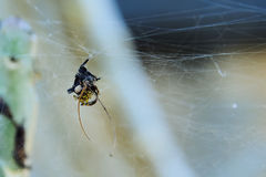 Baby of Spider Stock Photo
