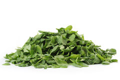 Baby Spinach Stock Photos