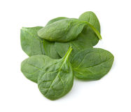 Baby Spinach Royalty Free Stock Images