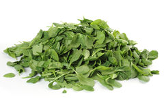 Baby Spinach Royalty Free Stock Photos