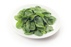 Baby spinach Stock Images