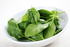 Baby spinach royalty free stock photo