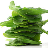 Baby Spinach Stock Image