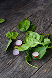 Baby spinach Royalty Free Stock Image