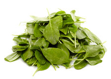 Baby spinach Stock Photography