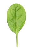 Baby spinach Stock Photos