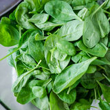 Baby spinach closeup. Spinacia oleracea, baby spinach closeup Stock Images
