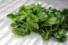 Baby spinach, fresh green leaves on the kitchen counter. royalty free stock photo
