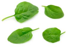 Baby spinach leaves Royalty Free Stock Image