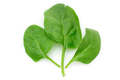 Baby spinach leaves Stock Image