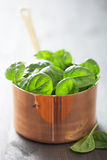 Baby spinach leaves in copper pot. Baby spinach leaves in a copper pot Stock Images