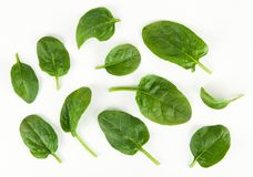 Baby spinach leaves. Fresh green baby spinach leaves Royalty Free Stock Image