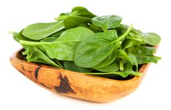 Baby spinach leaves. Fresh green baby spinach leaves Royalty Free Stock Photography