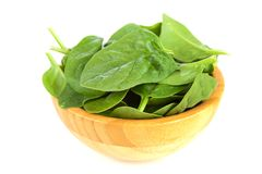 Baby spinach leaves. Fresh green baby spinach leaves Royalty Free Stock Photos