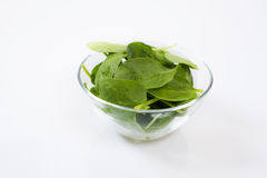 Baby spinach leaves in the glass bowl Stock Images