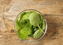 Baby spinach leaves in the glass bowl Royalty Free Stock Images