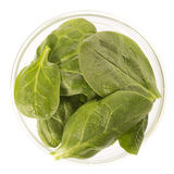 Baby Spinach Leaves Isolated Stock Image