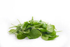 Baby spinach leaves Stock Photos