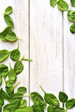 Baby spinach leaves on a white wooden table. Royalty Free Stock Image