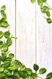 Baby spinach leaves on a white wooden table. Royalty Free Stock Photography