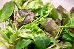 Baby spinach salad Royalty Free Stock Images