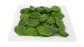 Baby spinach on a square plate Stock Image