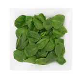 Baby spinach on a square plate Stock Images