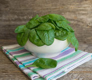 Baby spinach in a white plate Royalty Free Stock Images