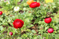Baby spring flowers Royalty Free Stock Photos