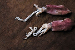 Baby squid Royalty Free Stock Images