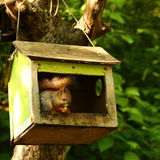 Baby squirrel Royalty Free Stock Photos