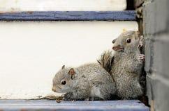 Baby Squirrels Stock Photo