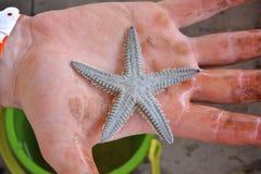 Baby Starfish lizenzfreie stockbilder