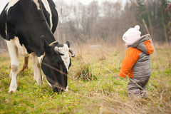 Baby stay near feeding cow Stock Photo
