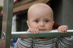 Baby on step ladder. Little baby adhering to an aluminum step ladder and looking to the camera Royalty Free Stock Images