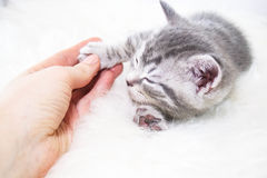 Baby striped kitten asleep Royalty Free Stock Images