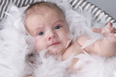 Baby  in studio with white feathers Stock Photography