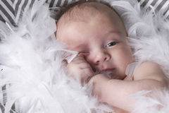 Baby  in studio with white feathers Royalty Free Stock Photos