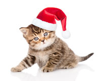 Baby tabby kitten in christmas hat looking at camera.  isolated on white Stock Photo