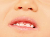 Baby teeth Royalty Free Stock Image