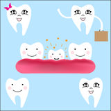 Baby teeth. The first baby teeth. Happy child with healthy teeth. Vector illustration. Growing young tooth Royalty Free Stock Photos