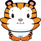 Baby Tiger Cub Stock Image