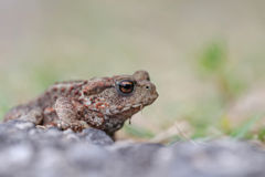 Baby toad stock photography