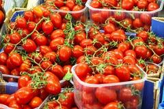 Baby tomato Stock Photos