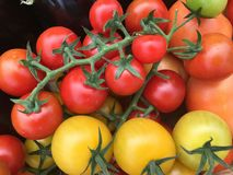Baby Tomatoes. Farm fresh baby tomatoes Stock Image