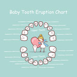 Baby tooth chart eruption record Stock Photography
