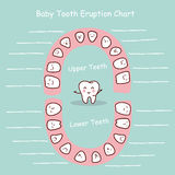 Baby tooth chart record Stock Photography
