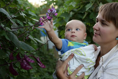 Baby touching bush Royalty Free Stock Photo