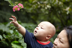 Baby touching flowers Stock Photography