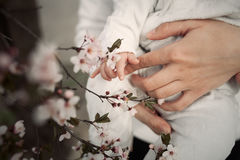 Baby touching flowers. children`s hands closeup. Mother hold child near cherry flowers. Spring time Royalty Free Stock Images